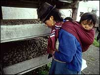 La esposa de un granjero con su hijo, observa la cultivación de papas en Ecuador (foto gentileza FAO)