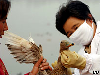 A duck is vaccinated against bird flu in China