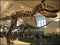 T Rex skeleton in the Museum of Natural History, New York