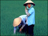 Workers in a paddy field, BBC