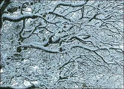 Twigs, David Price