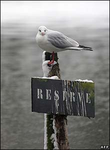 A gull rests in a snow-covered park to the west of Paris on Saturday 26 November
