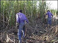 Trabajadores cubanos (Foto Raquel P�rez)