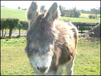 Nellie the donkey