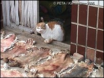 Cat next to cat skins