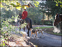 New Forest Hounds