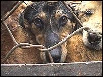 Perros en jaulas en un mercado chino
