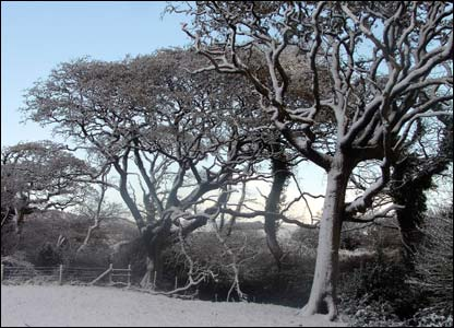 The footpath to Hafod Heulog, Kenfig Hill, Wales