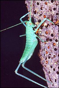 Una hormiga se alimenta de un insecto grande