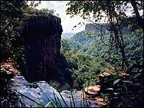 Rainforest in Brazil (BBC)