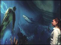 Aquarium at World Museum Liverpool