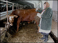Anastasia checking radiation levels in a cow shed