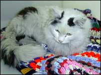 Cookie the cat - picture from RSPCA