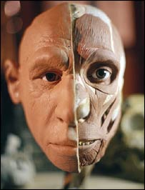 Reconstruction of a Neanderthal     (Image: BBC)