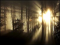 Sun shining through trees (Getty Images)