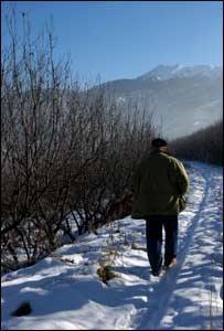Orchard near Almaty