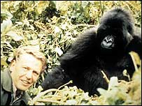 Sir David Attenborough and a gorilla in the Life on Earth series