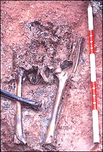 The skeletal remains found by workers