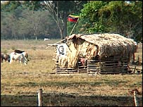 Peasant occupation