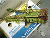 Bunches of khat