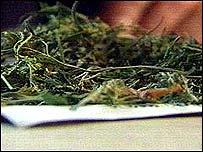 Bundle of cannabis