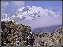 The melting snow caps of Mount Kilimanjaro