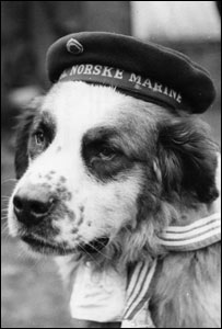 Bamse the sea dog
