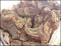 Iron Age bones - the thoracic block (pic: Lampeter University)