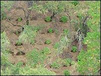 Área del Parque Nacional Sequoia utilizada para el cultivo ilegal de marihuana.