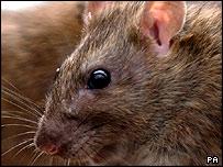 Mouse, PA