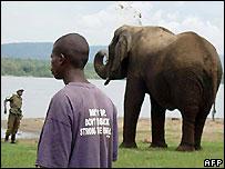 Rwandan elephant Mutware