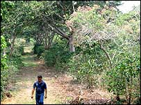 Las Lajas co-operative where 120 species of trees help shade the coffee shrubs