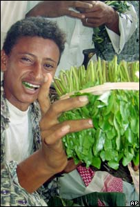 Khat on sale in a market in Sana'a
