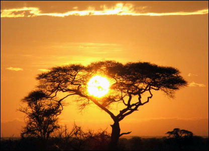 Sunrise seen through a tree in the Serengeti, Tanzania