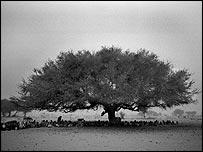 Villagers shelter beneath tree