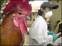 A health official collects blood samples for bird flu testing from chickens in Jakarta