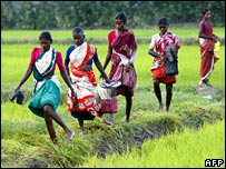 "Indian women labourers walk back home after a day of work in a paddy field near Velankanni in the Nagapattinam district of India""s southern state of Tamil Nadu"