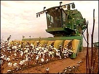 Texas cotton farm