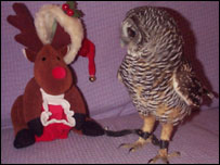 An owl at the trust's Llandudno wildlife centre