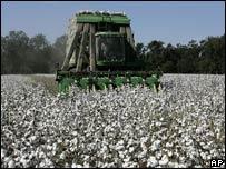 US cotton farming