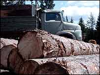 Logs and timber lorry in Bosnia