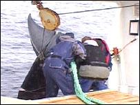 Whalers pull a minke aboard (BBC)