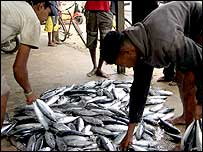 Wholesalers examine the catch