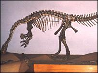 Esqueleto de Plateosaurus @ PM Sander