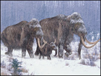 Artist's impression of a mammoth (BBC)