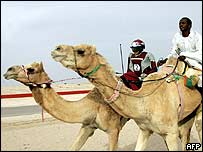 A child camel jockey (left) in the Gulf. Archive picture