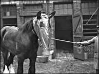 Horse wearing a gas mask in the 1940s