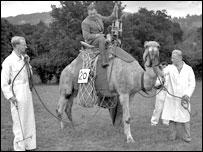 Camel carrying spraying equipment