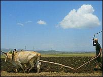 An Ethiopian farmer, AP