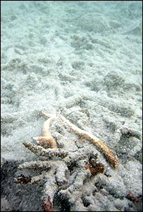 Damaged coral (IUCN)